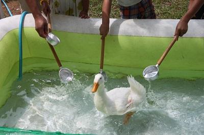 17 water duck